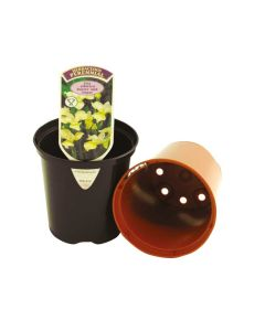 Aeroplas 9F Terracotta Injection Moulded Slotted Pots