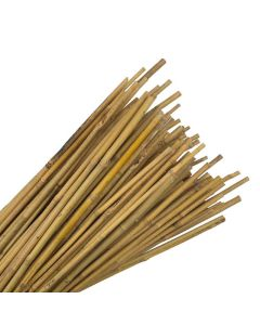 10 ft (305cm) Bamboo Canes - 22 to 24mm Diam. 25 Pack