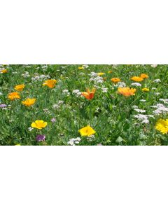 High Impact Low-Grow Annuals Flower Mixture - Colour Boost 2 - 1kg