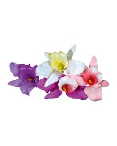 Orchids Assorted (Pack of 100)