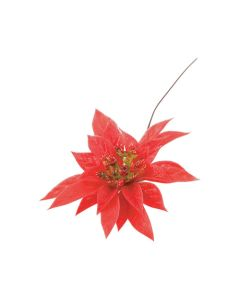 Red Center Red Poinsettia (Pack of 100)
