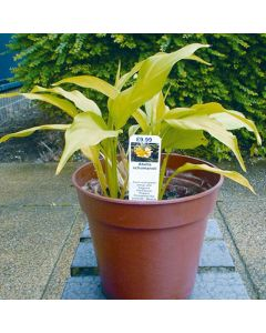 Laserplas Stick In Plant Labels - 137 x 25mm (Pack of 1000)