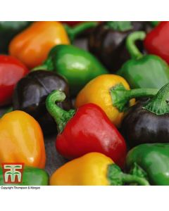 Thompson & Morgan Pepper Seeds - Mixed Mini Bell Sweet Peppers