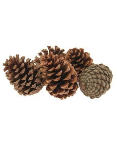 Large Maritima Cones (No Wires) (Pack of 25)
