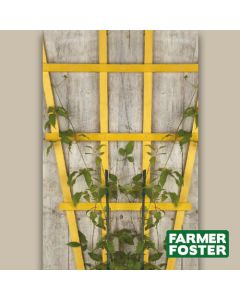 "70"" Rose Fan Trellis Natural Pk5"
