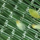 Extra Fine Mesh Insect Netting