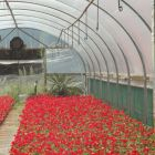 Lumisol CLEAR Polytunnel Cover